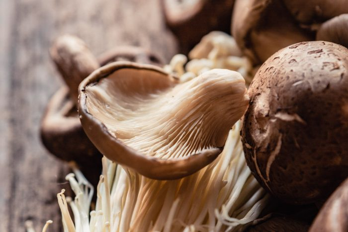 photo of oyster mushroom on a brown surface